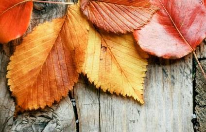 autumn-picnic-masthead-vsco_72dpi